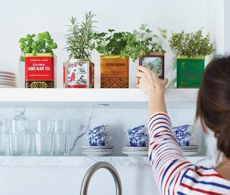 Tea Tin Herbs