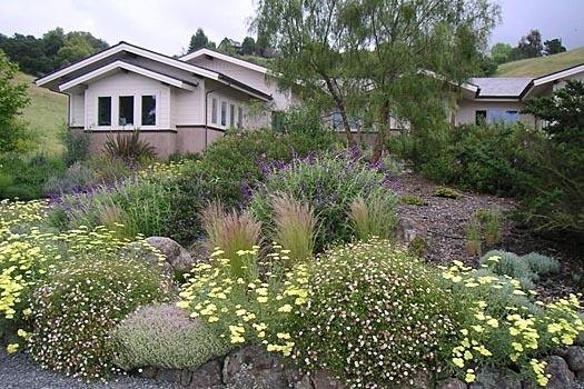 zero landscaping and attract butterflies, etc