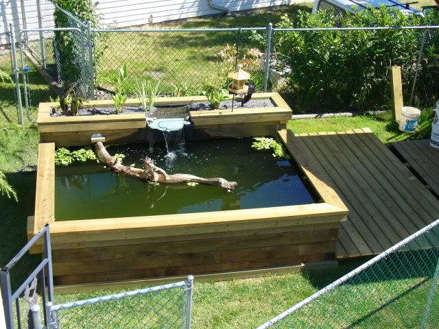 Above ground the love shack pinterest for Outdoor fish pond setup