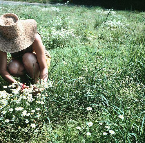 Picking wild flowers...