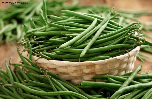 Green Bean Salad with Basil, Balsamic, and Parmesan | Recipe