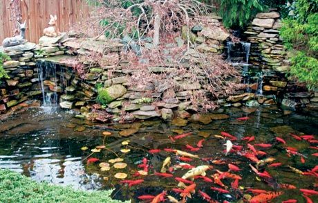 Diy build a small pond in your backyard my classroom for Diy small fish pond