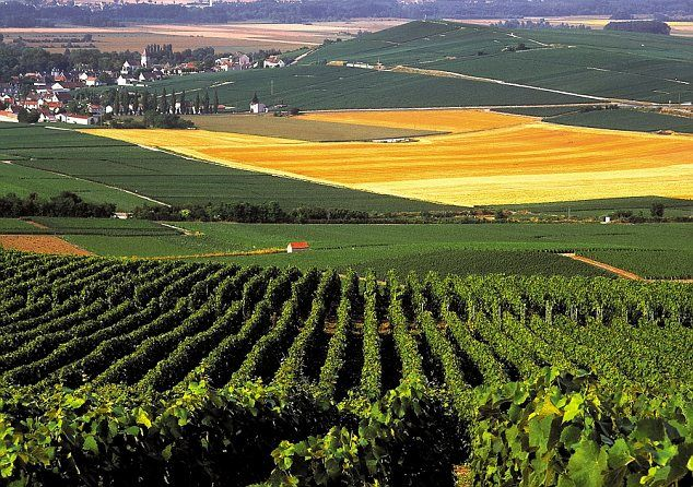 Epernay France  city photos gallery : Champagne Vineyards, near Epernay, France | France | Pinterest