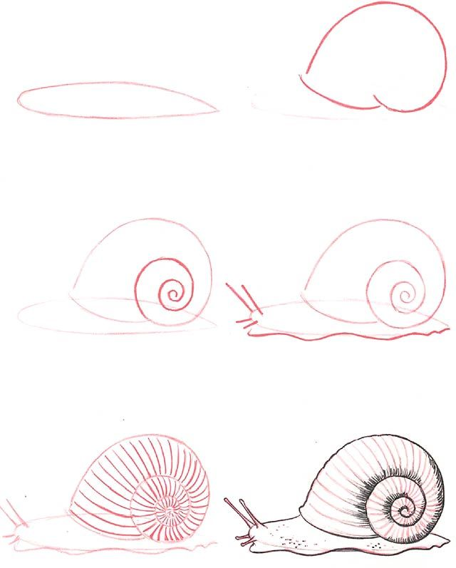 Learn to draw snail class pinterest for Simple snail drawing