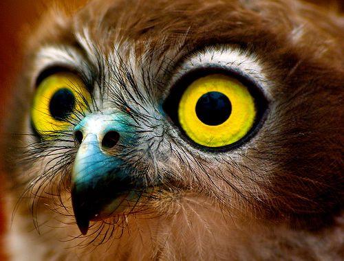 Look in me eyes