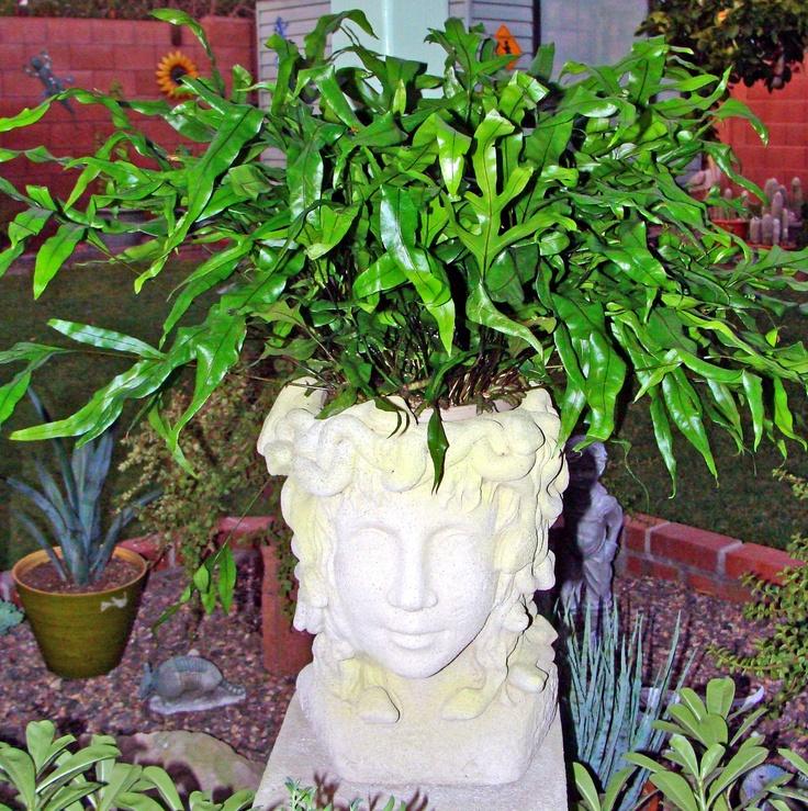 My medusa head planter head planters pinterest - Medusa head planter ...