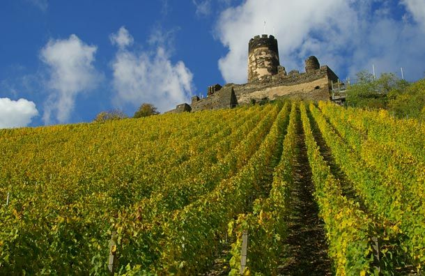 Rhine valley castle vineyards take me away pinterest