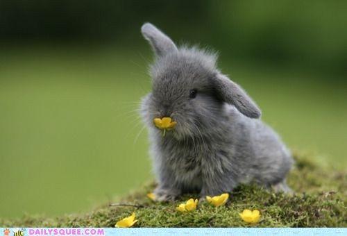 Buttercup bunny!