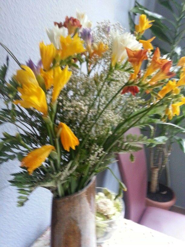 Fresia les plantes d 39 interieur pinterest for Plante dinterieur