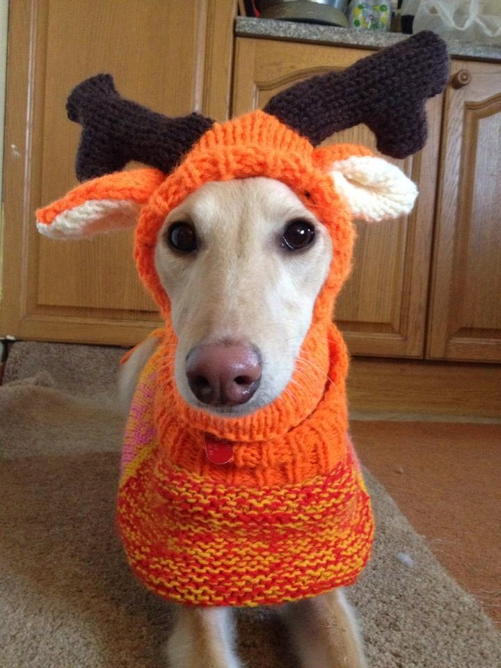 Knitting Pattern For Whippet Coat : Pin by Marcia Antonio on projetos Pinterest