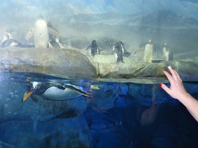 Chattanooga Tn Aquarium Hamilton County Tennessee And