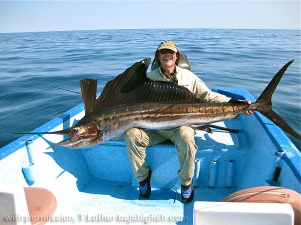 Pin by villa del palmar at the islands of loreto on the for Baja california fishing