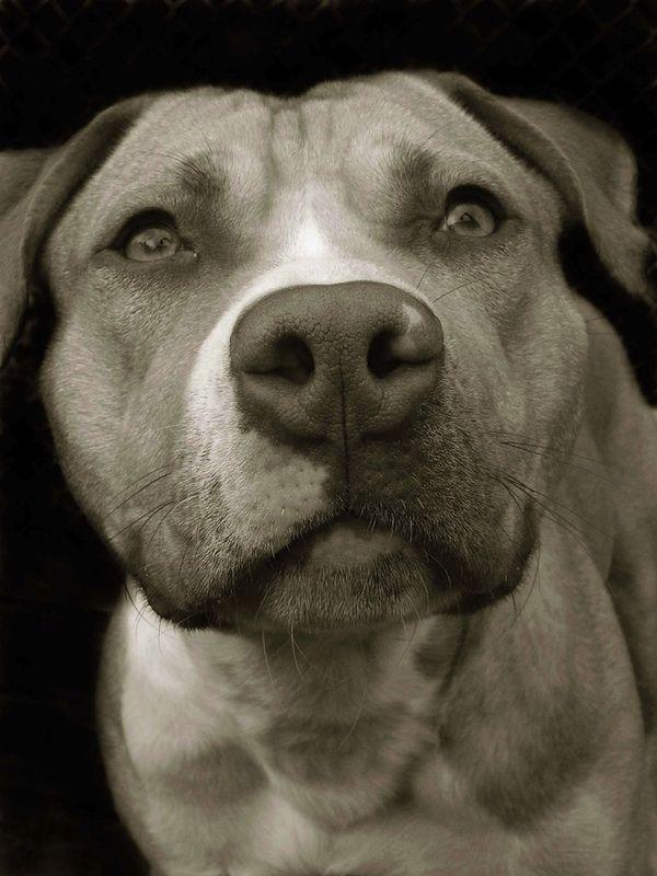 Shelter Dog Portraits