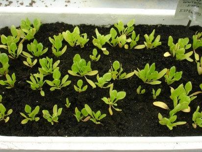Cómo sembrar semillas