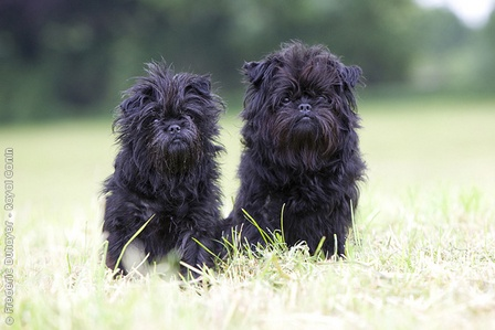 Discover ideas about Cutest Dog Breeds