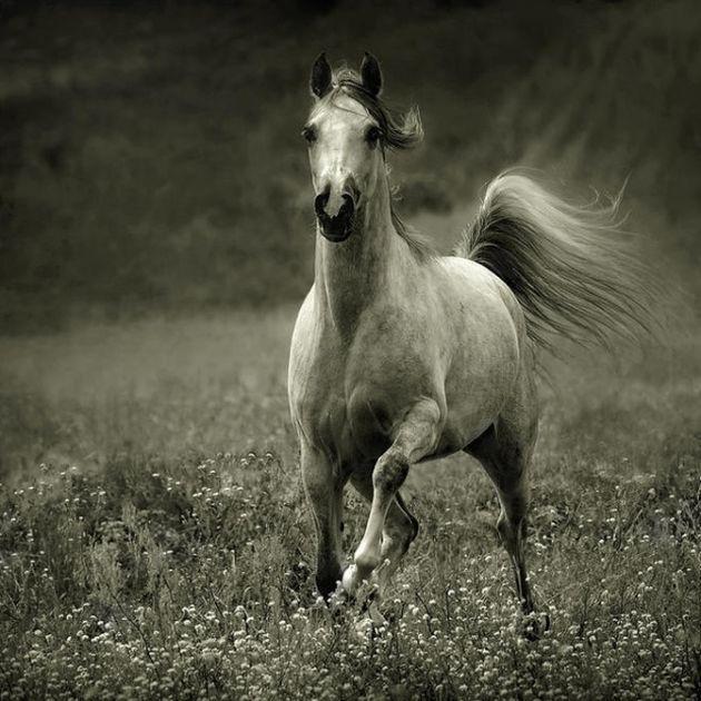 i lovethis horse!
