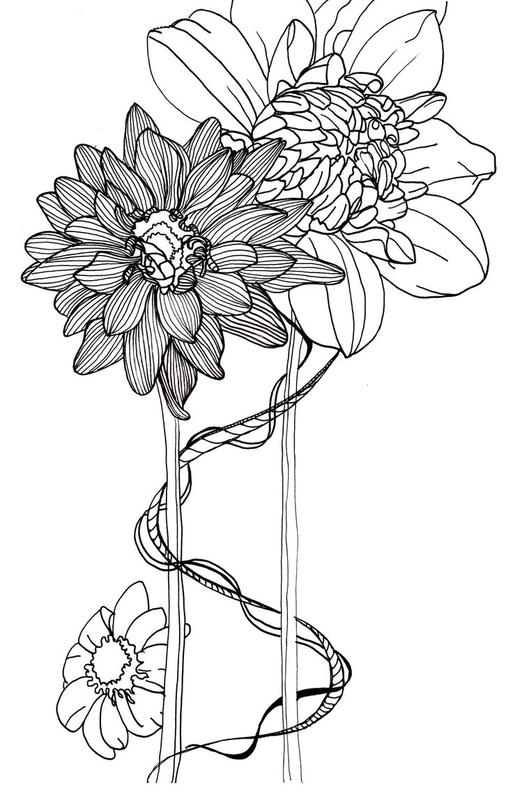 Dahlia Flower Line Drawing : Line drawing flowers dahlias pottery finds pinterest