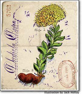 Pmdd Treatment Natural Herbs