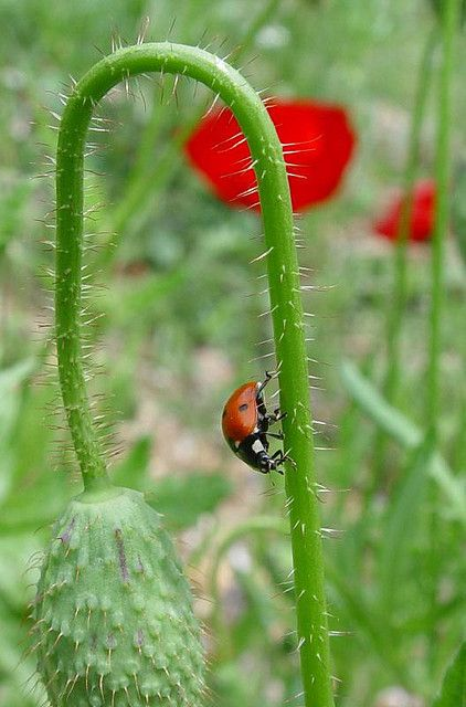 Life is full of ups and downs lady bugs pinterest