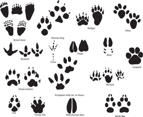 Go Back > Gallery For > Cat Paw Print Trail Tattoo