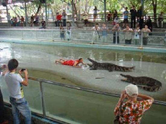 Pattaya Crocodile Farm  Pattaya  Pinterest