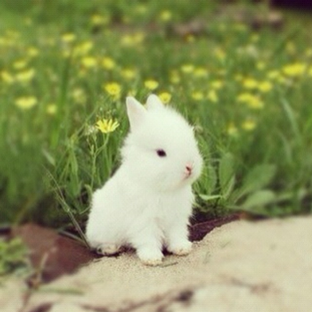 One Easter, I expect to see this little bunny in a basket :)