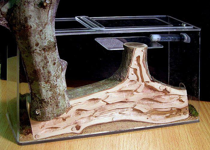Как сделать ферму муравьев