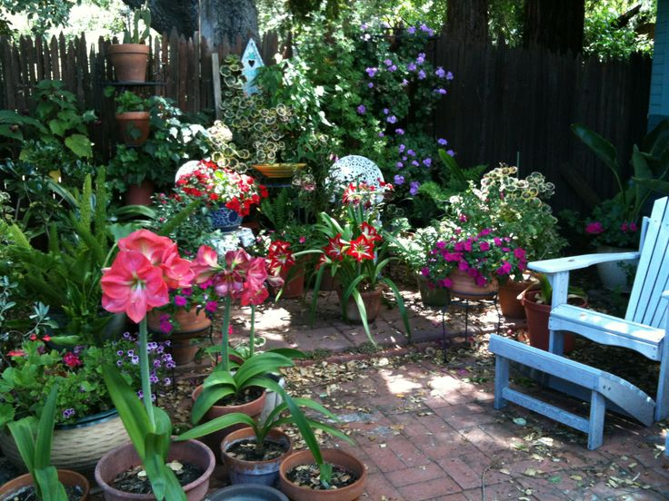Pin by manang rokki on Container Gardening Under The Oak