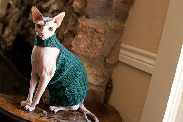 Knitting Pattern For Cat Sweater : Queen Bean Sphynx Sweater (knitting pattern) #sphynx #cat #sweater #clothes #...