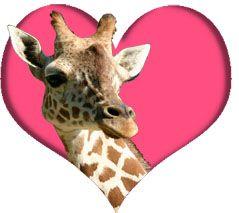 valentine's day animal boxes