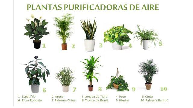 Plantas purificadoras de aire paisajismo pinterest Plantas limpiadoras de aire