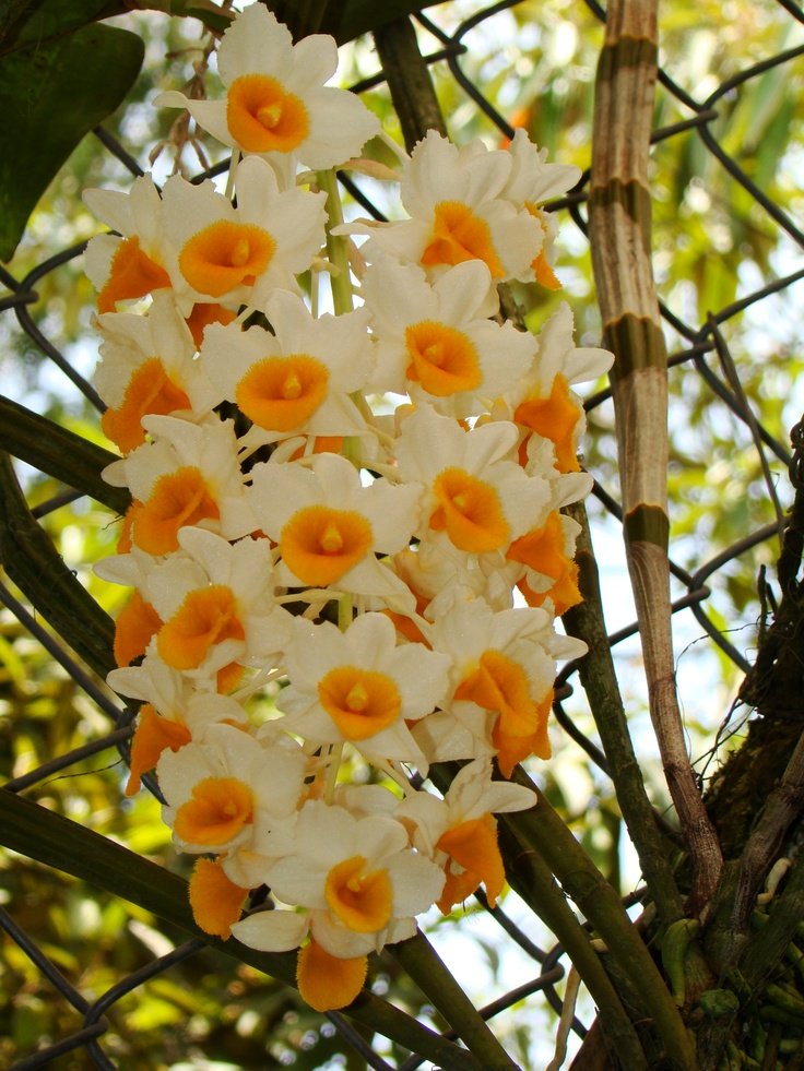 Orquideas lankester flores y jardines pinterest - Jardines con rosas ...