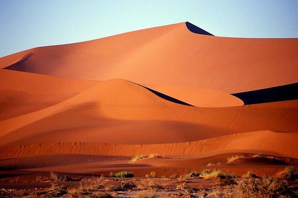 ナミブ砂漠の画像 p1_12