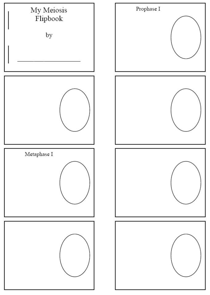 Mitosis Flip Book Template Blanks for mitosis flip book