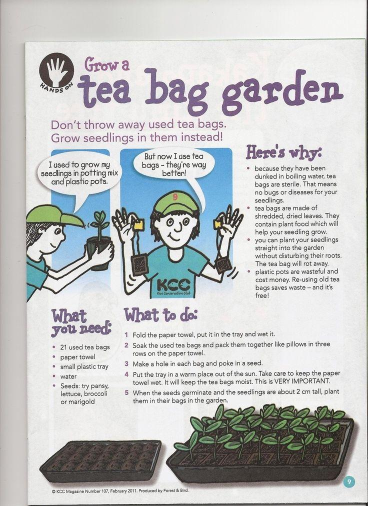 Grow A Tea Bag Garden Gardening Group Board Pinterest