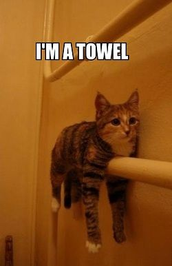 They said I could be anything so I became a towel.