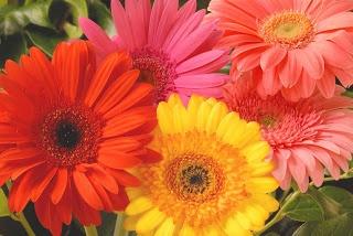 valentine email flowers