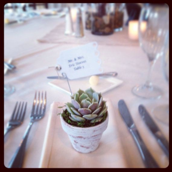 50 Succulent Wedding Favors