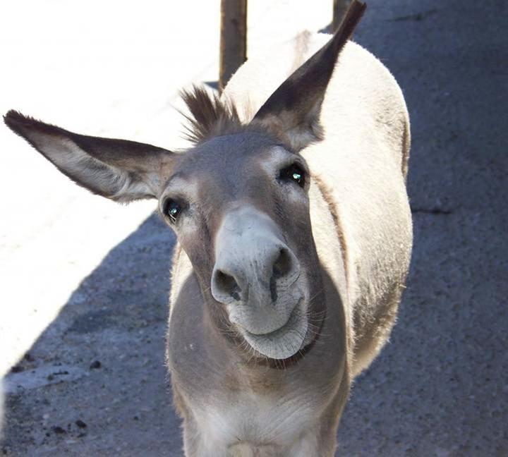 smiling donkey horses asses pinterest. Black Bedroom Furniture Sets. Home Design Ideas