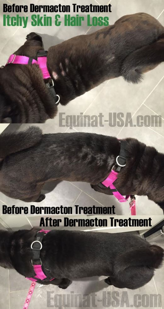 Best Itchy Dogs With Red Sore Skin Hair Loss Get