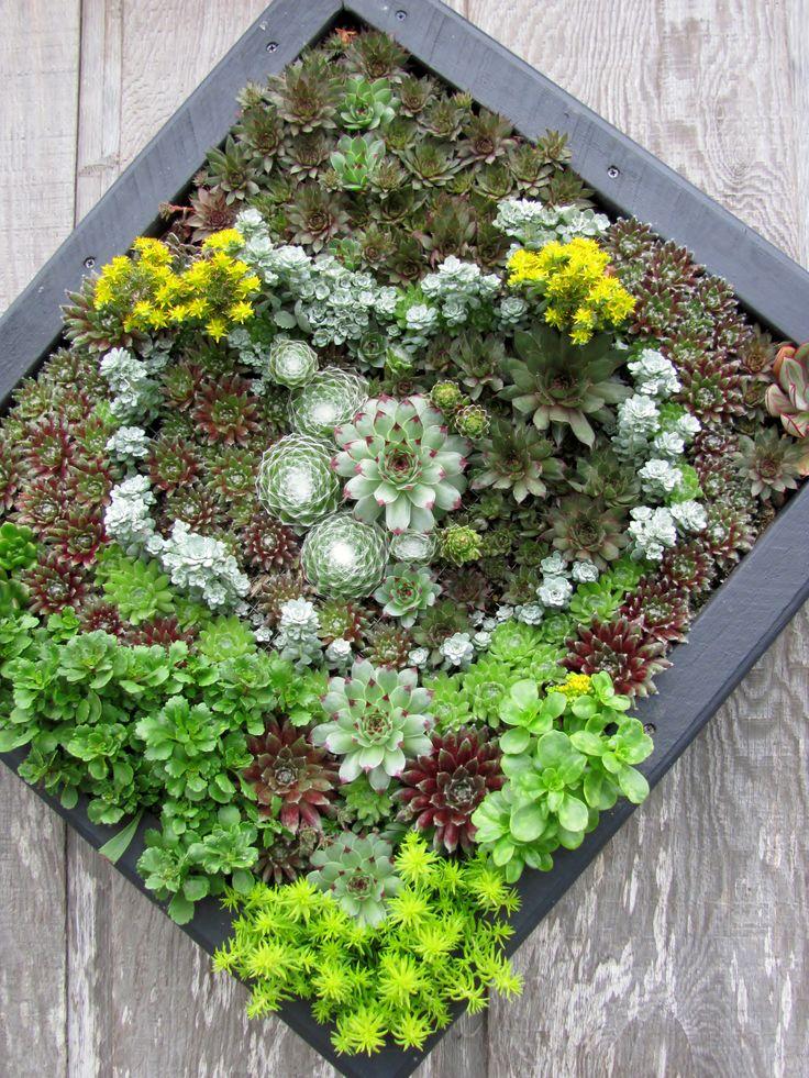 Succulent Hanging Garden Ideas Pinterest