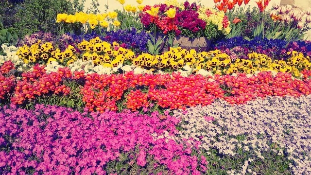 Beautiful flower beds flowers pinterest for Beautiful flower beds