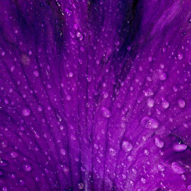 rain drops | The Color Purple | Pinterest