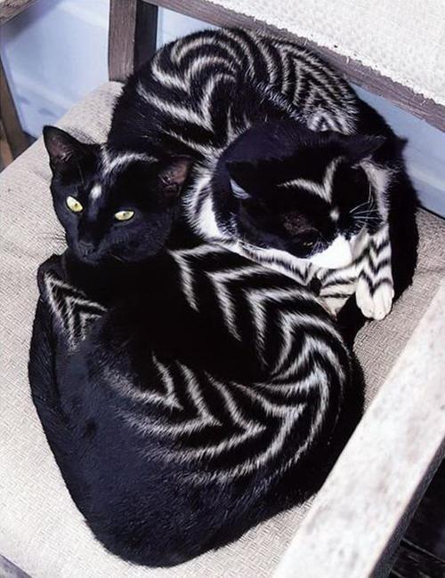 design ideas stylish furry pets