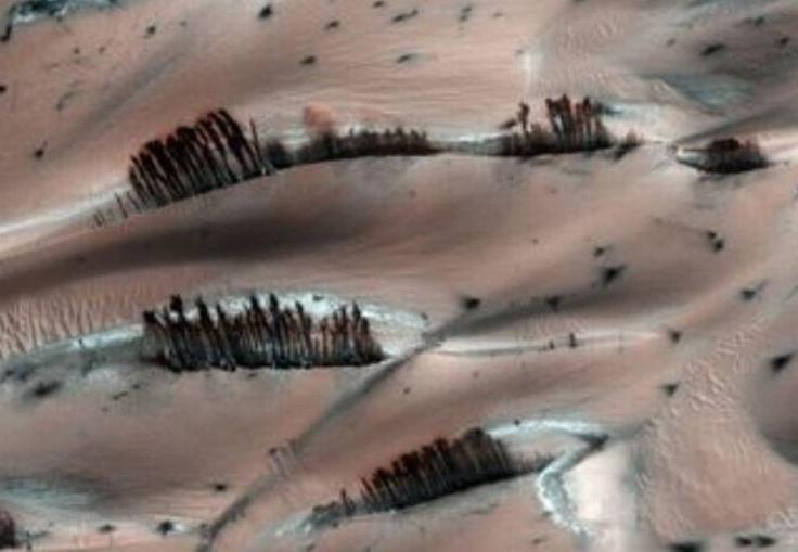 """¿Árboles en Marte?: imágenes """"misteriosas"""" del planeta Rojo"""