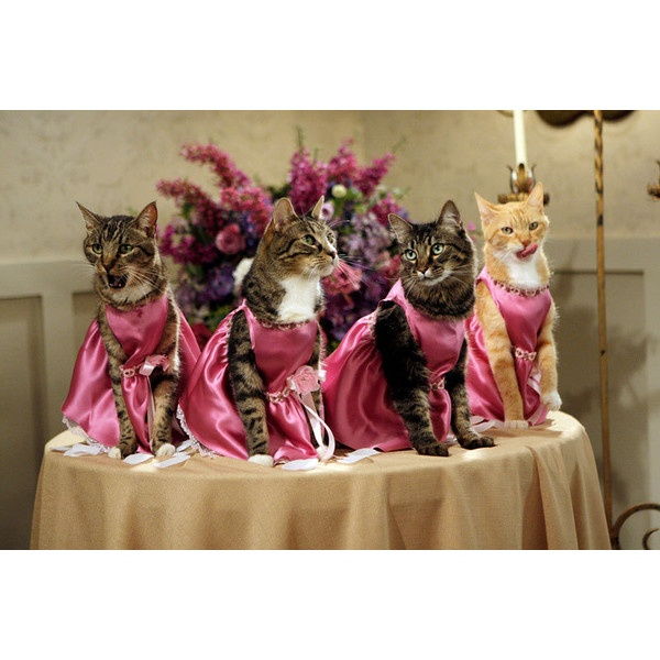 Beautiful bridesmaids. | Cat Wedding