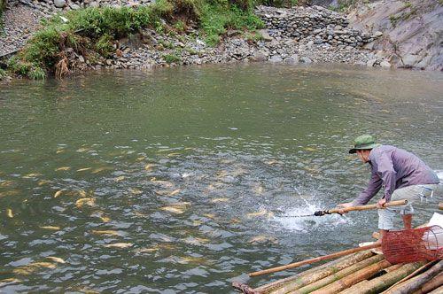 Cá hồi và cá tầm được nuôi ở Sapa là một món rất ngon