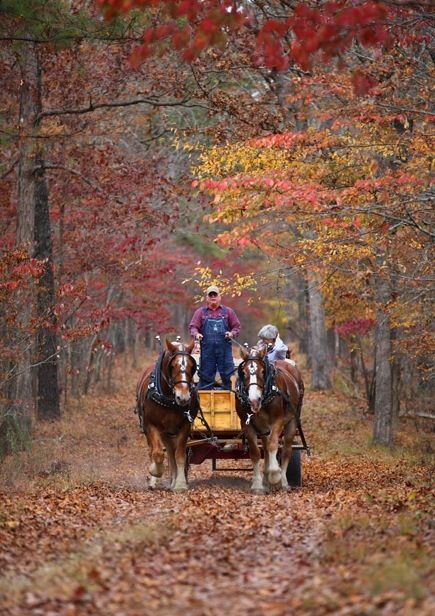 Hayride and Autumn go hand in hand.