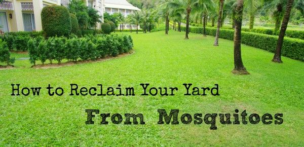 how to get rid of mosquitoes in the yard