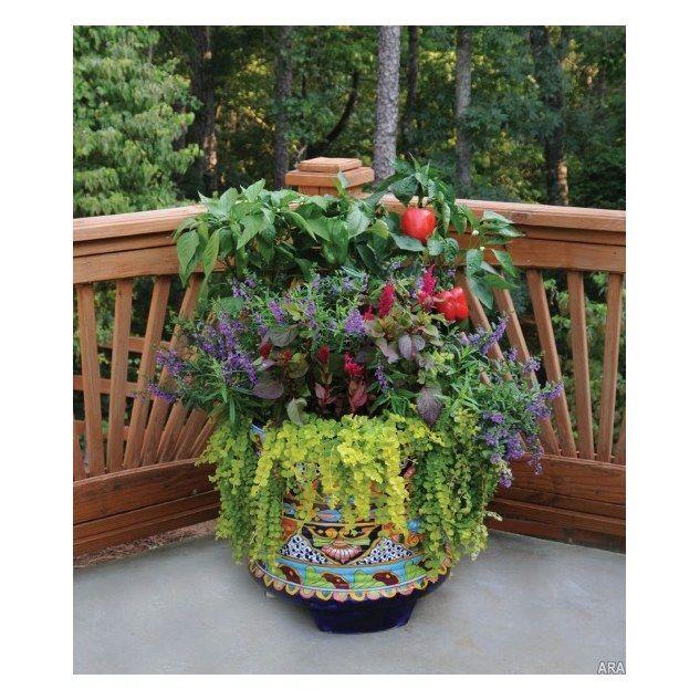 Pinterest Container Vegetable Gardening Ideas Photograph V